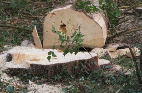 Initiation aux travaux forestiers