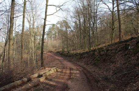 Forêt Lycée Chervé Noirétable